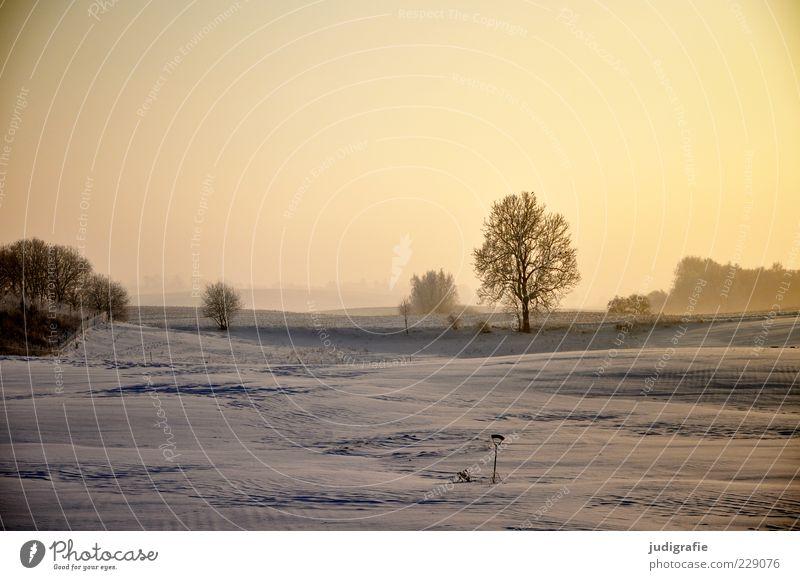 Winterlicht Himmel Natur Baum Pflanze Ferne Schnee Umwelt Landschaft Stimmung Feld gold natürlich Klima Idylle Wetter