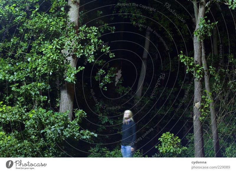 Nachtaktiv Mensch Natur Jugendliche Baum Blatt Einsamkeit ruhig Wald Erholung Umwelt Landschaft Leben Freiheit Bewegung träumen Zeit