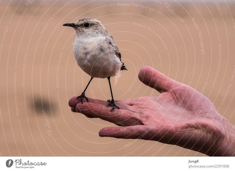 Startklar Hand Umwelt Natur Tier Wüste Vogel 1 Blick stehen lustig klug Freude Coolness Vertrauen Tierliebe Gelassenheit Neugier Beginn Zufriedenheit Farbfoto