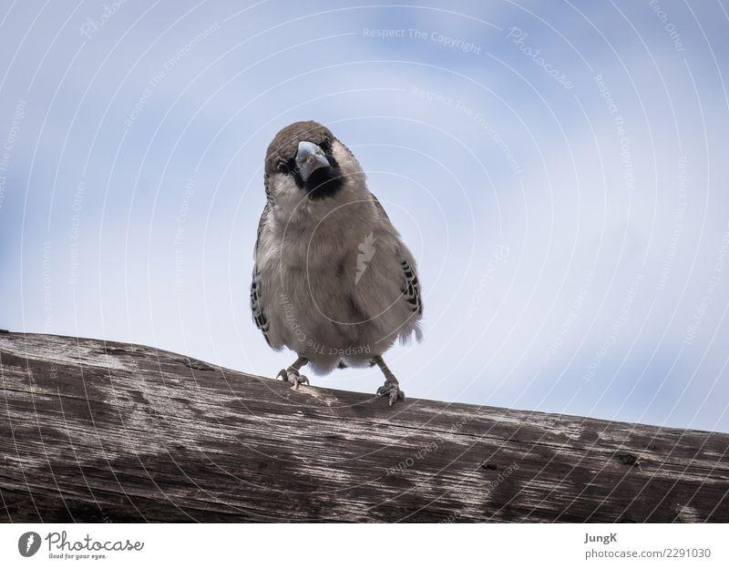Überblick Natur Baum Tier Freude lustig Vogel sitzen warten niedlich Neugier Afrika Interesse Erwartung Namibia
