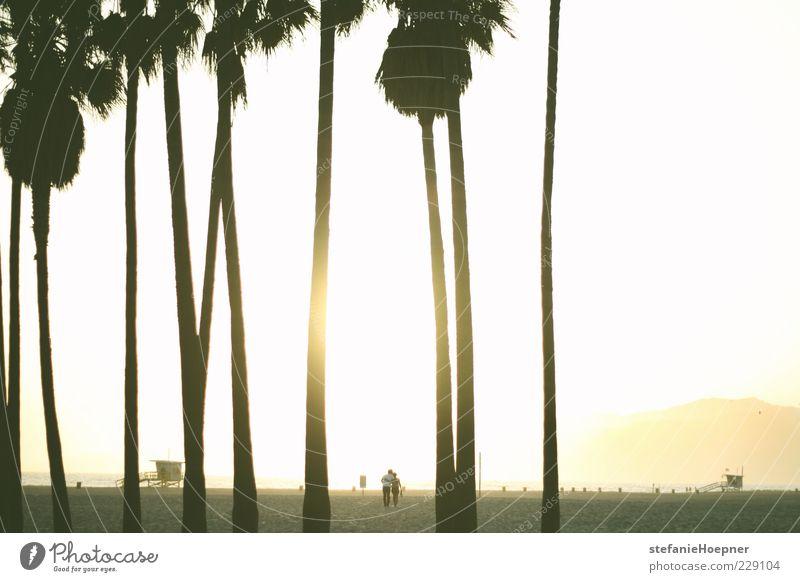 under palm trees Ferien & Urlaub & Reisen Sommer Sommerurlaub Sonne Strand Meer Mensch Paar Partner 2 Sand Sonnenaufgang Sonnenuntergang Palme Erholung genießen