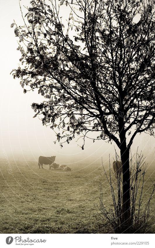 rumhängen II Natur Baum Pflanze Blatt Tier Herbst Wiese kalt Umwelt Landschaft Gras Eis Feld Nebel nass trist