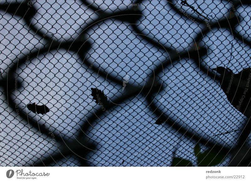 Freiheitsdrang Himmel blau schwarz Perspektive Netz Dinge Zaun Flucht Barriere Justizvollzugsanstalt Gitter Pferch Maschendraht