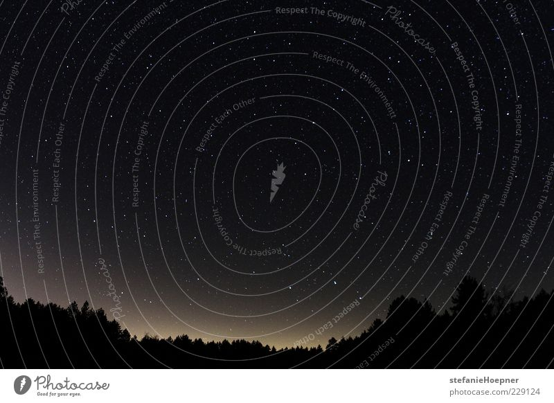 star filled sky Himmel Natur Baum Ferne Wald Landschaft träumen glänzend Stern leuchten Unendlichkeit Weltall Baumkrone Fernweh Textfreiraum Nachthimmel
