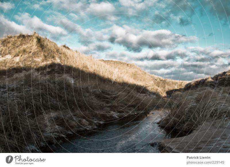 Drüben auf dem Hügel ... Umwelt Natur Landschaft Urelemente Luft Himmel Wolken Winter Klima Wetter Wind Pflanze Sträucher Strand Nordsee kalt schön wild Düne