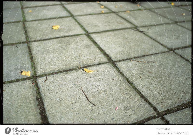 hartes Quadrat Umwelt Beton Platz Design liegen Klima trist Bodenbelag Zeichen Bürgersteig Quadrat trashig skurril Fuge Herbstlaub Surrealismus