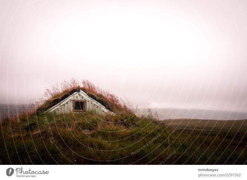 Eingewachsen Natur Landschaft Sonnenaufgang Sonnenuntergang Gras Wiese Hütte Fenster Dach dunkel wild grün rosa ruhig träumen Einsamkeit