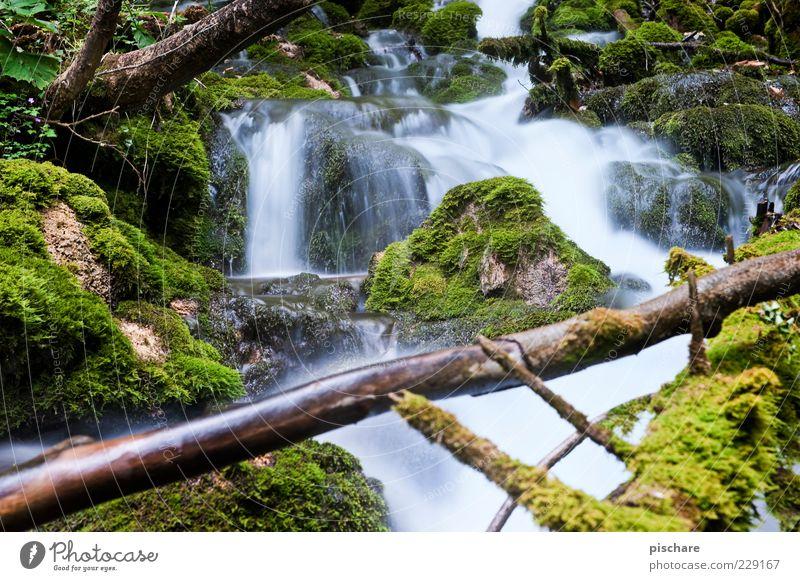 Bärenschützklamm Natur Urelemente Wasser Baum Moos Bach ästhetisch natürlich grün Zufriedenheit ruhig Umwelt Farbfoto Außenaufnahme Tag Langzeitbelichtung