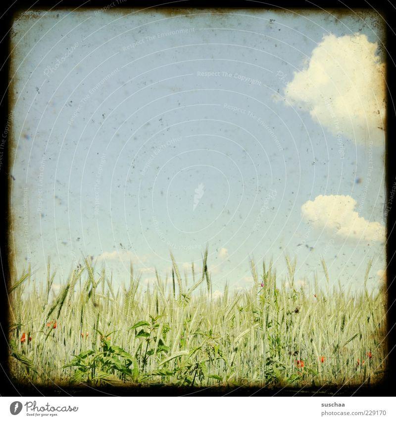 leicht bewölkt bis sonnig .. Himmel Natur Sommer Wolken Umwelt Landschaft Wetter Feld Klima außergewöhnlich Schönes Wetter Landwirtschaft Getreide Rahmen Ähren Nutzpflanze