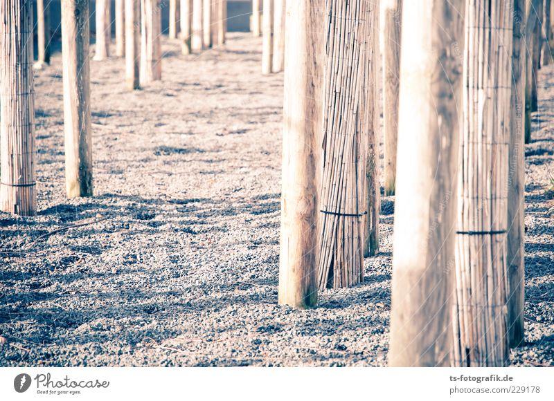 Optische Dystopie I Umwelt Baum Stein Holz Linie braun Baumstamm Schilfrohr Kies Kieselsteine Farbfoto Gedeckte Farben Außenaufnahme Muster Strukturen & Formen