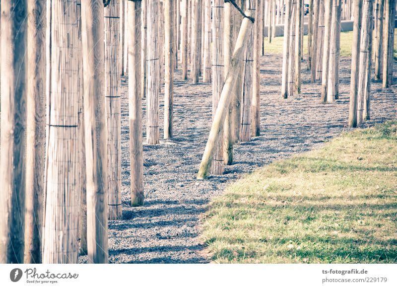 Optische Dystopie II Umwelt Urelemente Pflanze Baum Gras Wiese Stein Holz Linie dünn lang braun grau grün Baumstamm Schilfrohr Kies Kieselsteine Labyrinth