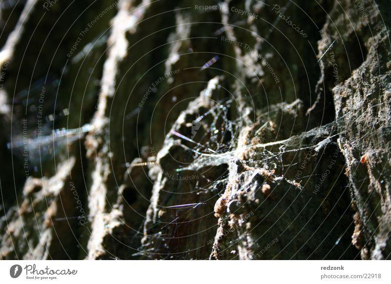 Baum im Detail alt grau Stein braun Felsen Netz Insekt Spinne Spinnennetz