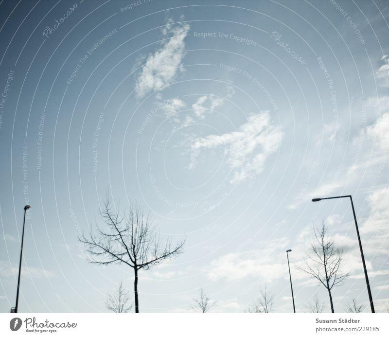 monoton Laterne Wolken Baum kahl Winter laublos Himmel Außenaufnahme Menschenleer Textfreiraum oben Tag Licht Kontrast Sonnenlicht Froschperspektive