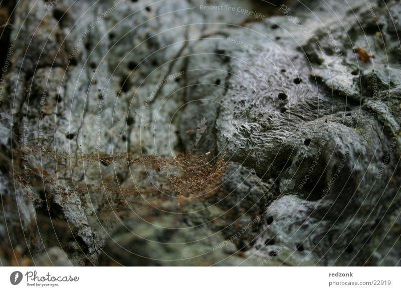 Baumdetail alt Baum grau Stein braun Felsen Netz Insekt Spinne Käfer Spinnennetz