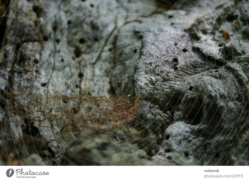 Baumdetail alt grau Stein braun Felsen Netz Insekt Spinne Käfer Spinnennetz