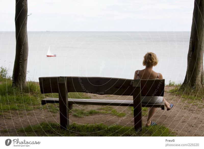 Meer betrachten Frau Mensch Himmel Wasser Baum Ferien & Urlaub & Reisen Sommer ruhig Erwachsene Ferne Erholung Küste blond sitzen Aussicht
