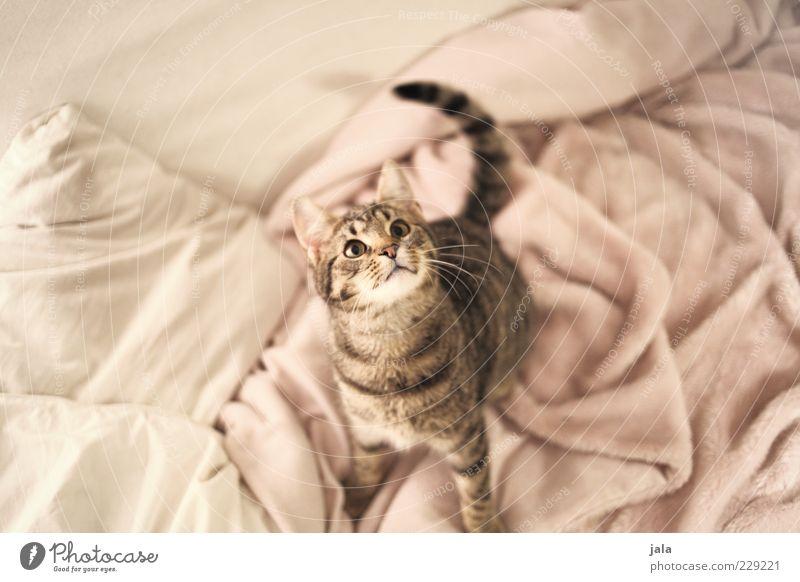 mau weiß Tier Spielen Katze klein Tierjunges rosa Neugier Sofa Konzentration Decke Haustier Vogelperspektive Katzenkopf