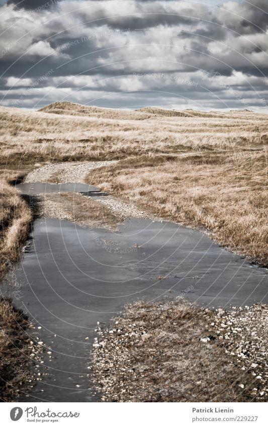 wir machen den weg frei Himmel Natur Pflanze Winter Wolken Ferne Wiese dunkel Umwelt Landschaft Gras Wege & Pfade Luft Wetter Eis Wind