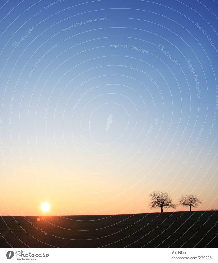 soak up the sun Natur Baum Sonne ruhig Umwelt Landschaft Zufriedenheit Horizont Klima Wachstum paarweise Kitsch Idylle Schönes Wetter harmonisch Blauer Himmel