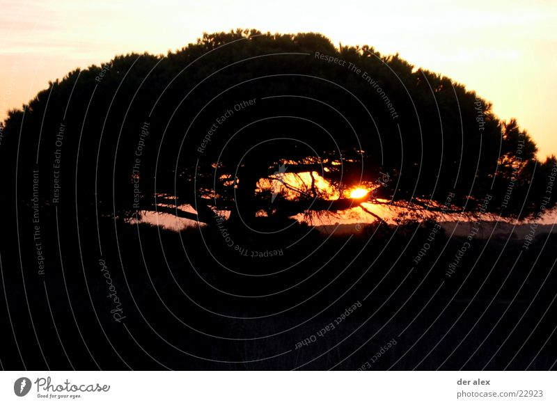 baumimweg Sonnenuntergang Gegenlicht Baum Spanien schwarz Einsamkeit dunkel feurig heiß Kontrast Natur Abend Brand