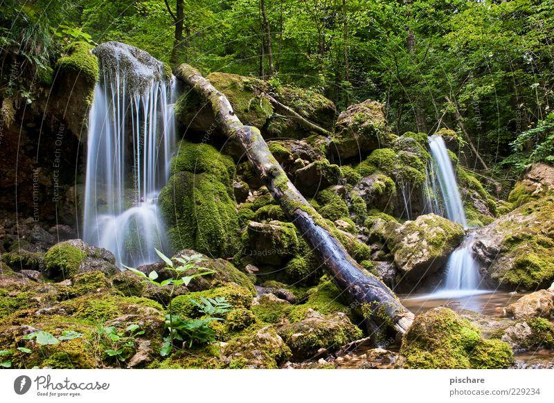 Bärenschützklamm II Natur Wasser grün schön Baum ruhig Umwelt Zufriedenheit Urelemente Baumstamm Moos exotisch Umweltschutz Bach Wasserfall fließen