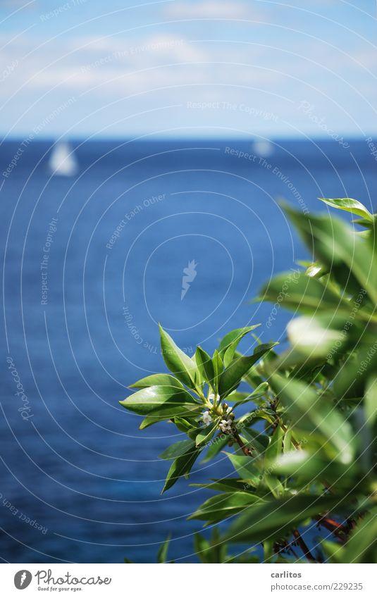 Segelboote Himmel Wasser blau grün Pflanze Ferien & Urlaub & Reisen Sommer Blatt Ferne Erholung Umwelt Bewegung Küste Zufriedenheit Horizont Freizeit & Hobby