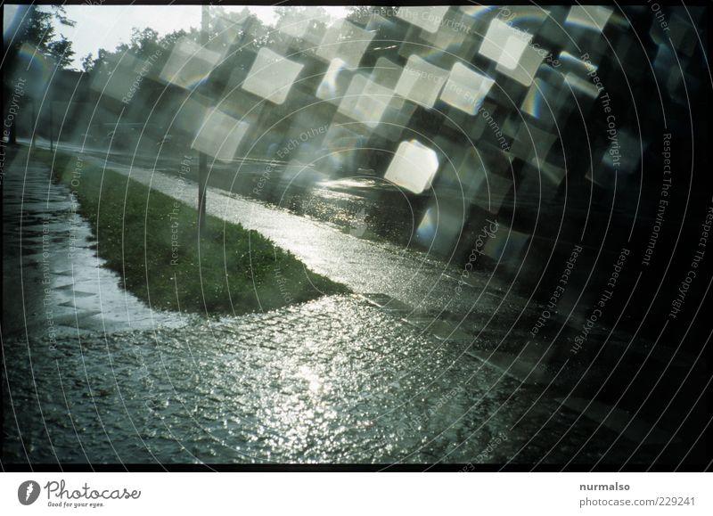 Regenglitzer Natur Sommer Straße Umwelt Stimmung glänzend nass Wassertropfen wild Klima geheimnisvoll trashig Verkehrswege Gewitter Klimawandel