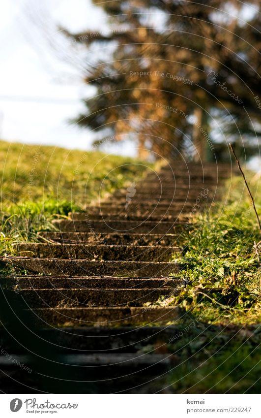 Sonnentreppe Natur grün Baum Pflanze Umwelt Wiese Gras hell Beton Treppe Schönes Wetter aufwärts Gartenweg Steintreppe