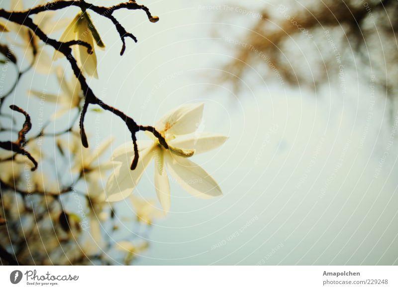 ::11-7:: Umwelt Natur Pflanze Himmel Frühling Sommer Klima Wetter Schönes Wetter Blume Blüte Freude Zufriedenheit Frühlingsgefühle Romantik schön trösten