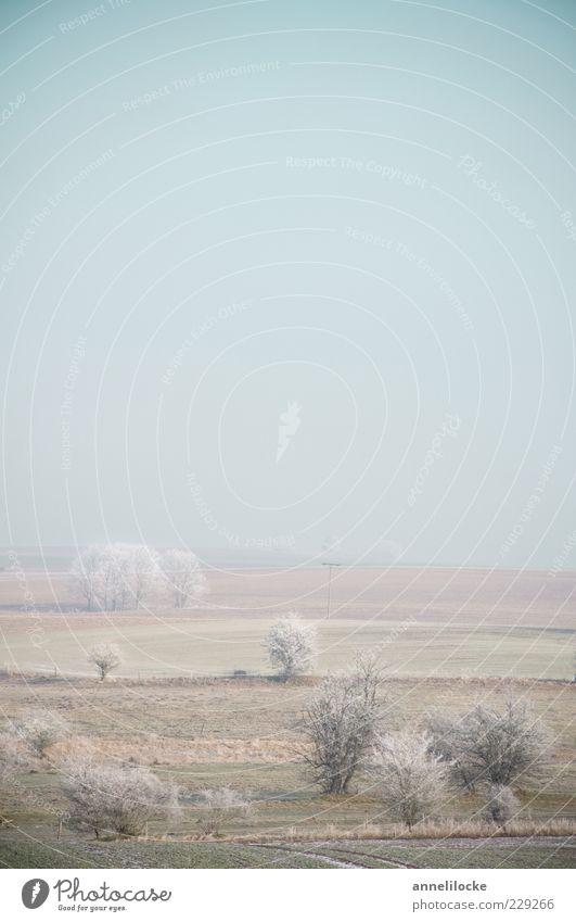eisige Stille Natur Baum Winter ruhig kalt Landschaft Eis Stimmung Feld Nebel Wetter Umwelt Horizont Frost Klima Raureif