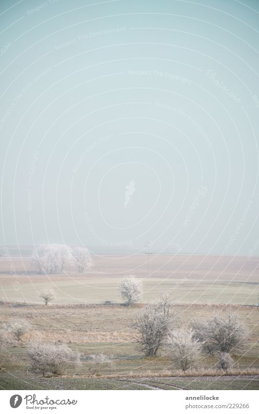 eisige Stille Umwelt Natur Landschaft Horizont Winter Klima Wetter Nebel Eis Frost Feld kalt ruhig Stimmung schlechtes Wetter Raureif Baum