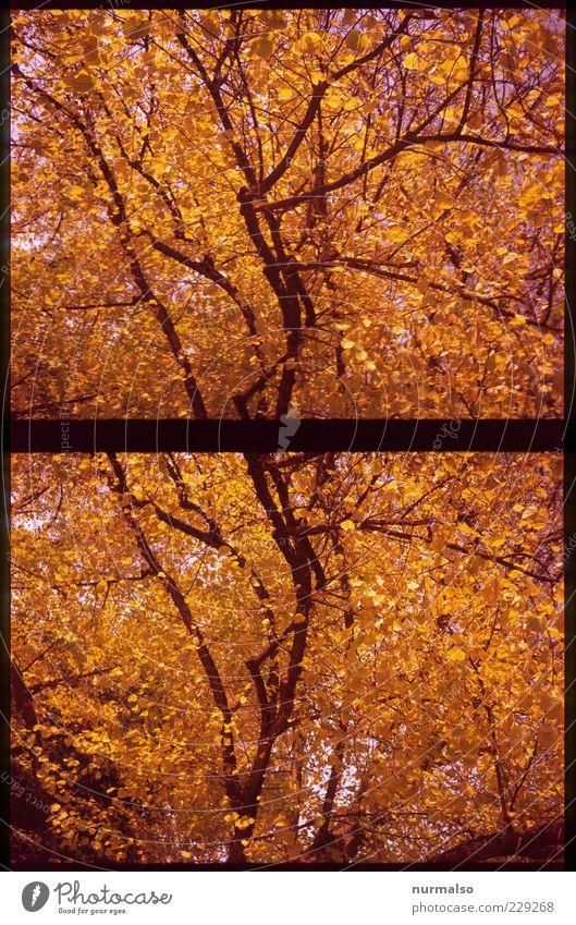Goldene Träume Lifestyle Natur Herbst Schönes Wetter Baum glänzend leuchten Stimmung Beginn Duft einzigartig Ende Erholung Verfall Blatt Ast Farbfoto Experiment