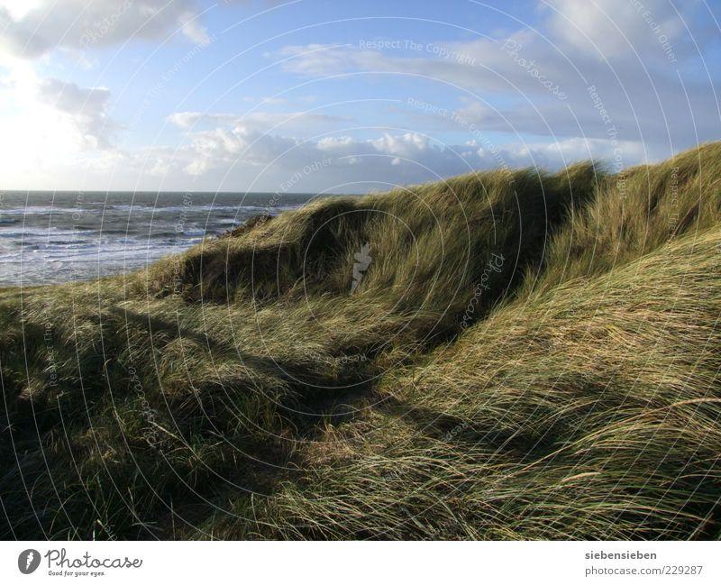 Stehen bleiben und durchatmen harmonisch Wohlgefühl Erholung ruhig Ferne Freiheit Strand Meer Insel Natur Landschaft Himmel Herbst Schönes Wetter Pflanze Gras
