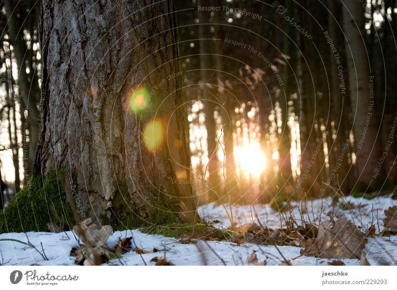 Kitsch im Winterwald II Baum Sonne Blatt Winter Wald gelb Schnee Umwelt Wärme Wetter Eis gold Klima leuchten Frost Schönes Wetter