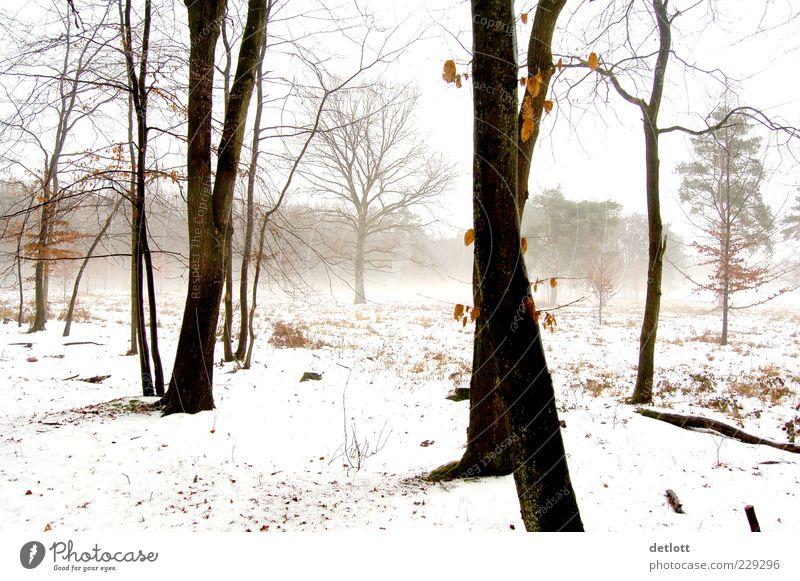 winterwald Natur weiß Baum Winter ruhig schwarz Wald Schnee Landschaft Gefühle grau träumen Park hell braun Zufriedenheit