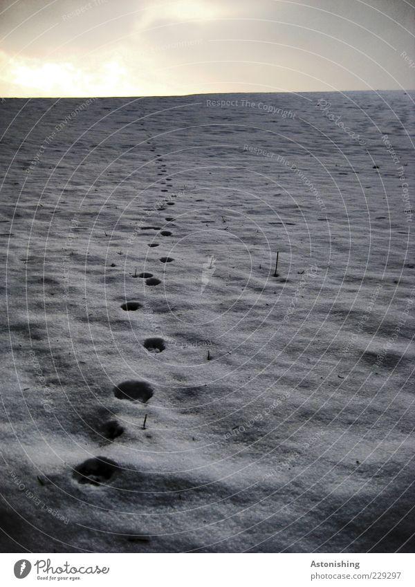 bis zum Horizont Umwelt Natur Landschaft Erde Himmel Wolken Winter Wetter schlechtes Wetter Eis Frost Schnee Wiese Feld hoch kalt blau grau schwarz weiß Spuren
