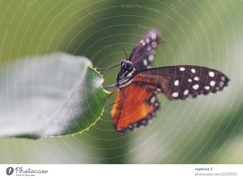 Schmetterling Natur Blatt Tier Wildtier Passionsblumenfalter 1 Erholung rot Glück Fröhlichkeit Zufriedenheit Lebensfreude Kraft Tierliebe schön achtsam ruhig