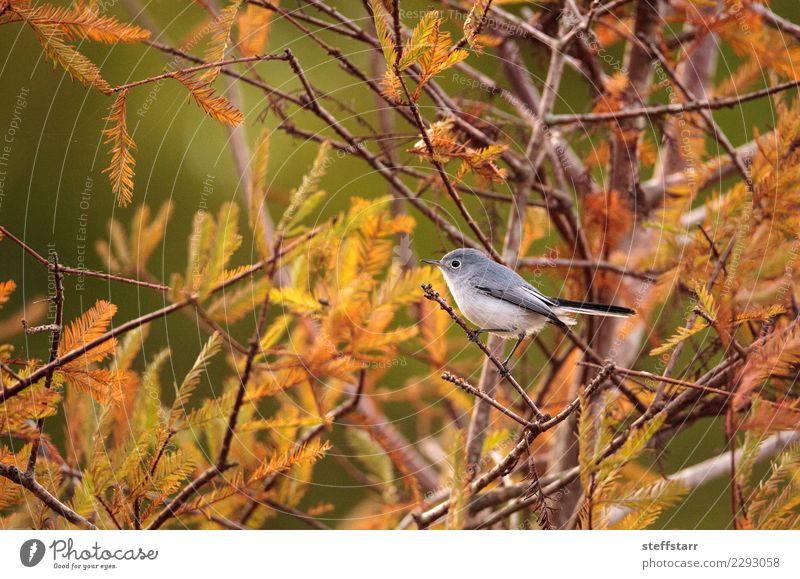 Natur Baum Tier grau Vogel wild Florida Neapel Barsch Wildvogel