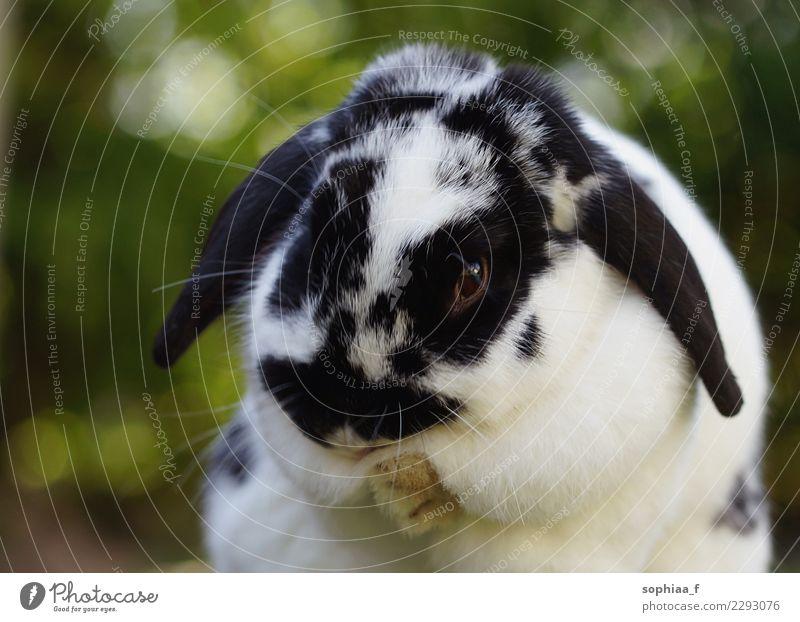 Kaninchen Natur Tier ruhig Freude Umwelt Glück Freiheit Freizeit & Hobby Zufriedenheit Kraft Lebensfreude niedlich Reinigen weich Sauberkeit Gelassenheit
