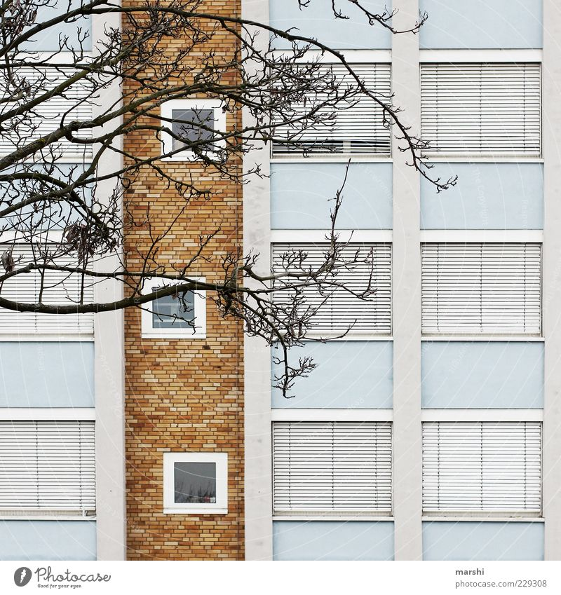 Laden dicht blau weiß Baum Stadt Haus Fenster Wand Mauer braun geschlossen Fassade Autofenster Ast Zweige u. Äste Rollladen laublos