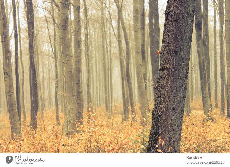 another. day. Ausflug Freiheit Umwelt Natur Herbst Wetter Nebel Pflanze Baum Sträucher Wald Holz Stimmung Leben Klima Wachstum Wege & Pfade Nebelschleier