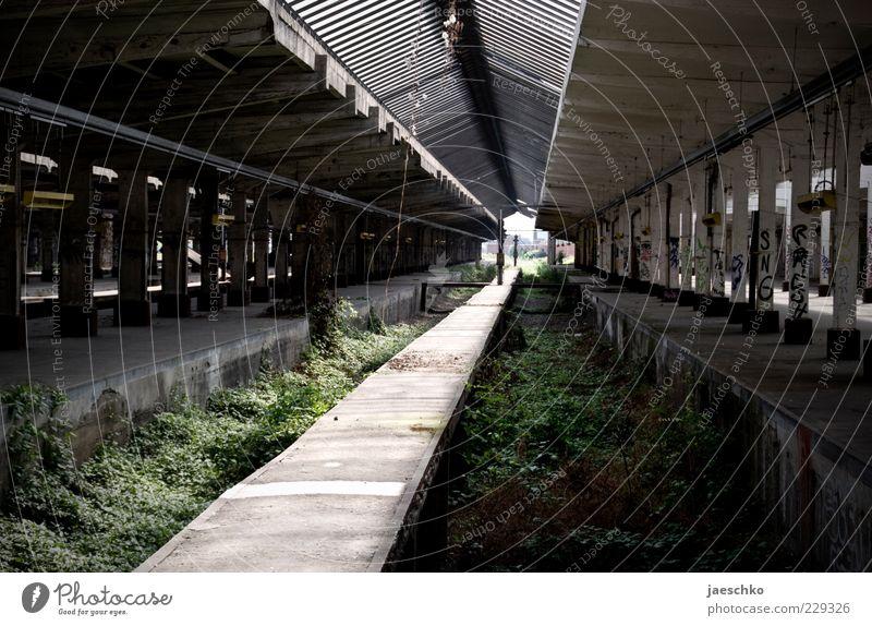 Natur übernimmt alt Pflanze Linie Perspektive Wandel & Veränderung Vergänglichkeit Symbole & Metaphern Güterverkehr & Logistik verfallen Gleise Vergangenheit