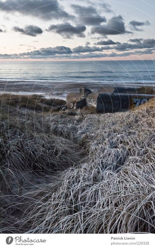 wenn der winter kommt Himmel Natur Pflanze Meer Strand Winter Wolken kalt Schnee Umwelt Landschaft Küste Luft Stimmung Wetter Eis