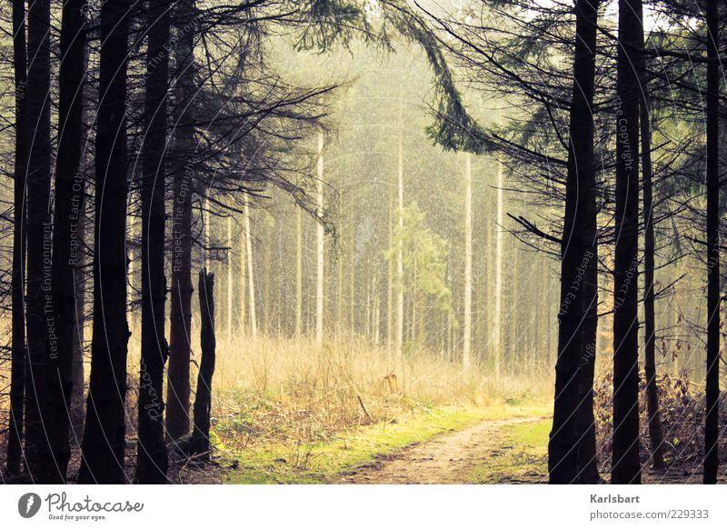 ode. an den wald. Natur Baum Pflanze Wald Herbst Umwelt Wege & Pfade Wetter Nebel Wandel & Veränderung Sträucher Ast Tanne Fichte Naturschutzgebiet Nadelbaum
