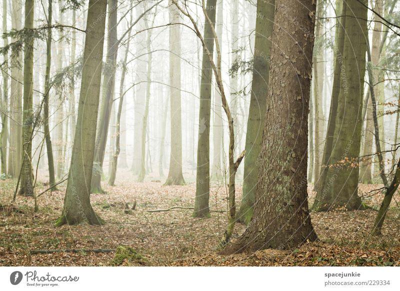 Finsterwalde Umwelt Natur Landschaft Pflanze Baum Blatt Wald Nebel Nebelschleier Farbfoto Außenaufnahme Menschenleer Tag Dunst Dämmerung Baumstamm