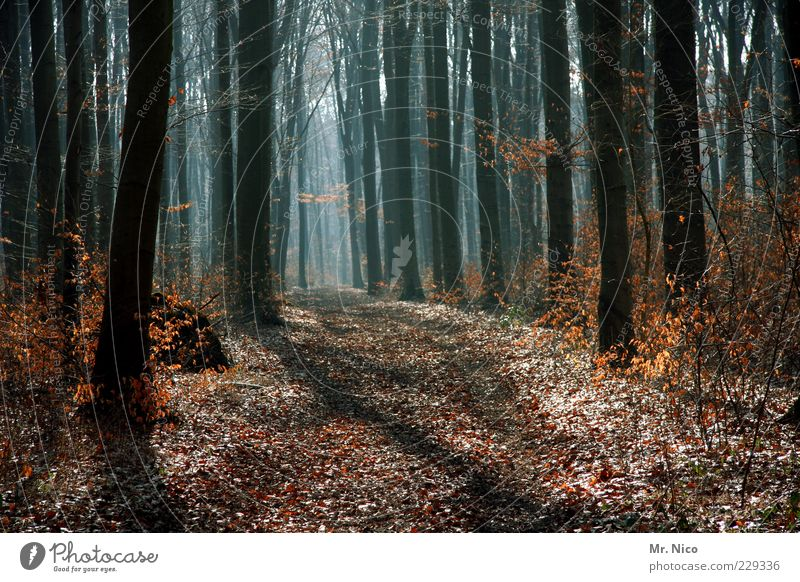 noch´ n wald Umwelt Natur Herbst Winter Klima Klimawandel Schönes Wetter Baum Blatt Wald Wachstum Fußweg Geäst Waldboden Holz Forstweg Menschenleer Mischwald