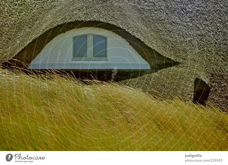 Ahrenshoop Natur weiß Pflanze Haus Umwelt Architektur Gras Gebäude Stimmung wild Dach Bauwerk Einfamilienhaus Dachfenster Dünengras Reetdach