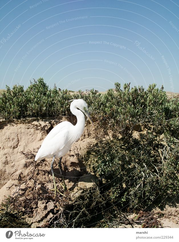 Model Himmel Natur blau weiß Pflanze Tier Umwelt Sand Klima Sträucher Wüste Reiher