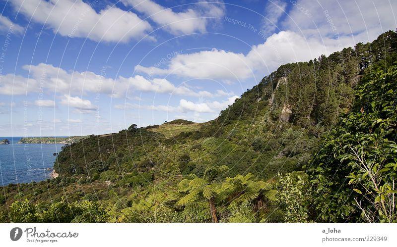 te whanganui-a-hei Natur Himmel Baum Meer grün blau Pflanze Ferien & Urlaub & Reisen Wolken Landschaft Küste Sträucher Reisefotografie Urwald Fernweh Neuseeland
