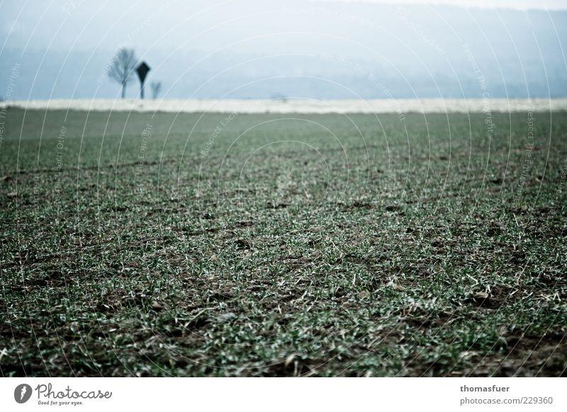 Greens and Blues Himmel Natur blau grün Einsamkeit ruhig Umwelt Gras Horizont Feld Nebel trist Kreuz schlechtes Wetter Nutzpflanze